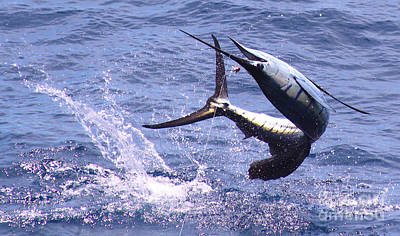 Swordfish Photograph - Sailfish Chaos by Carey Chen