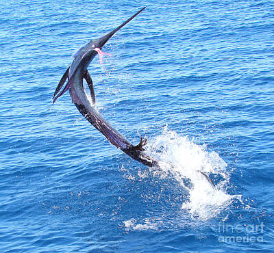 Swordfish Photograph - Sailfish Jump by Carey Chen
