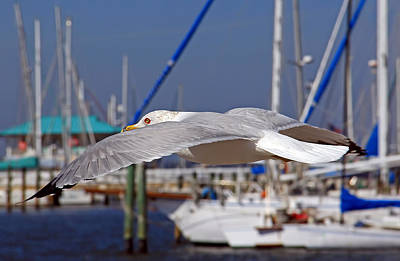 Photograph - Sailing by HH Photography of Florida