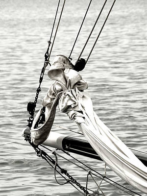 Photograph - Sailing The Seven Seas by Donna Lee