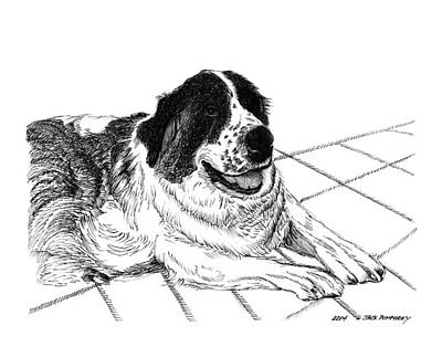 Dogs In Snow Drawing - Saint Bernard Bailey by Jack Pumphrey