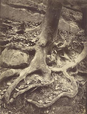 Saint-cloud, Tree Roots, Saint Cloud Park Eugène Atget Art Print by Litz Collection