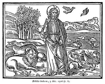 1506 Painting - Saint Francis, 1506 by Granger