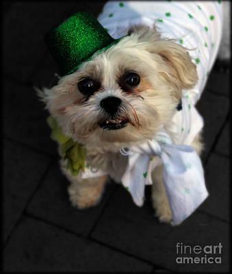Saint Patrick's Day  Art Print by Steven Digman