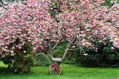 Photograph - Sakura And Wagon Wheel by Peggy Collins