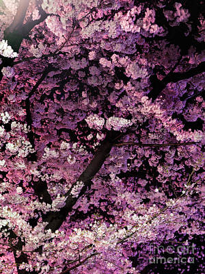 Sakura Photograph - Sakura Cherry Blossom At Night Art Photo Print by Oleksiy Maksymenko