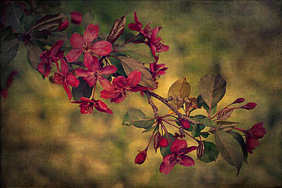 Blooming Digital Art - Sakura by Maria Angelica Maira