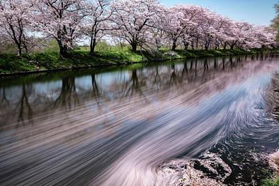 Cherry Tree Photograph - Sakura by Takayuki Koike