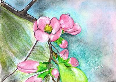 Sakura Drawing - Sakura by Tracy Hayden