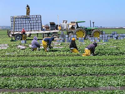 Photograph - Salinas Farmworkers by James B Toy