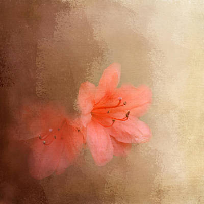 Photograph - Salmon Azaleas by Jai Johnson
