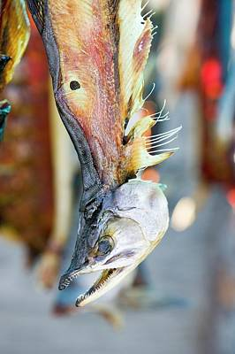 Rack Photograph - Salmon Caught By Eskimo Fishermen by Ashley Cooper