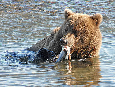 Photograph -  Dining On Salmon   by Dyle   Warren