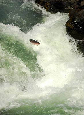 Photograph - Salmon Run 5 by Mamie Gunning
