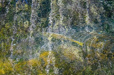 Salmon Art Art Print