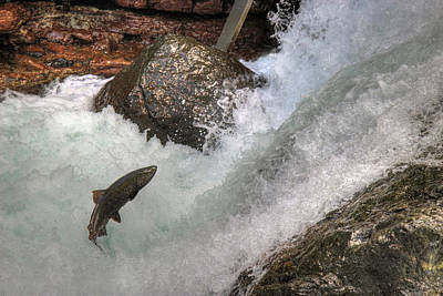 Photograph - Salmon Run by Randy Hall