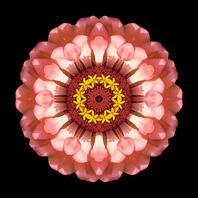 Photograph - Salmon Zinnia Elegans Iv Flower Mandala by David J Bookbinder