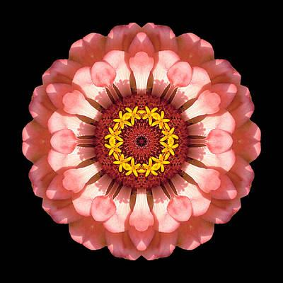 Salmon Zinnia Elegans Iv Flower Mandala Art Print by David J Bookbinder