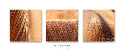 Salon D'equus Light Art Print