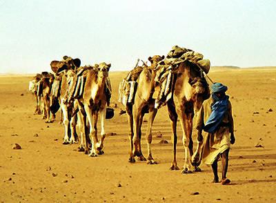 Sahara Mixed Media - Salt Caravan by Anthony Dalton