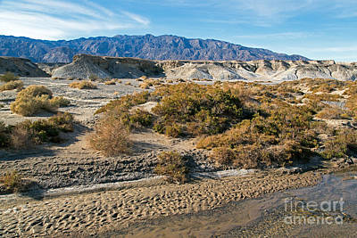 Photograph - Salt Creek Death Valley National Park by Fred Stearns