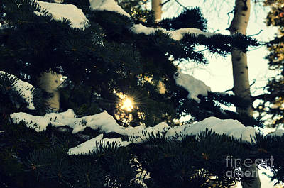 Photograph - Salt Lake City Pine Trees With Snow by Patricia Awapara