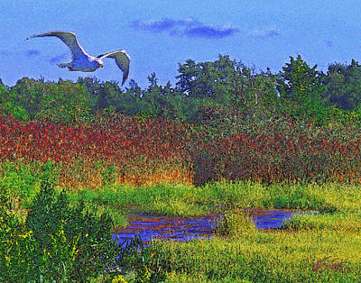 Digital Art - Salt Marsh Gull by William Sargent