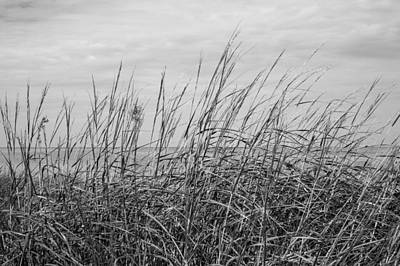 Photograph - Salt Marsh by Sara Hudock