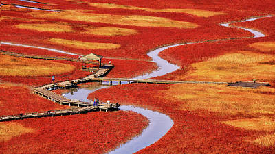 Autumn Color Photograph - Salt Pond by Tiger Seo