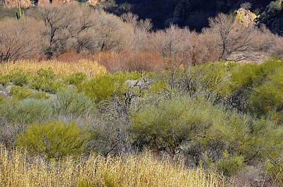 Photograph - Salt River Spring by Lynda Lehmann