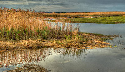 Photograph - Salt Water Marsh by Rick Mosher