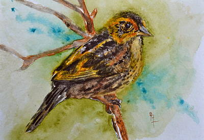 Saltmarsh Sparrow Print by Beverley Harper Tinsley