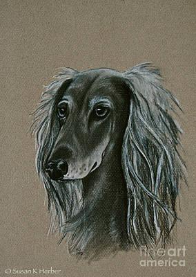 Drawing - Saluki by Susan Herber