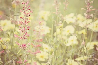 Photograph - Salvia Flower 1 by Chris Scroggins