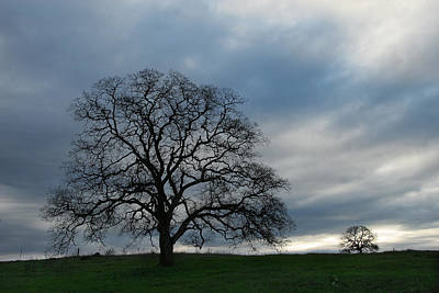 Photograph - Same Tree Many Skies 10 by Robert Woodward