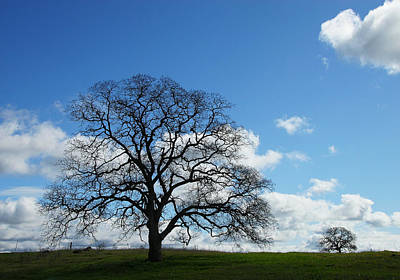 Photograph - Same Tree Many Skies 11 by Robert Woodward