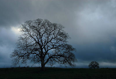 Photograph - Same Tree Many Skies 12 by Robert Woodward