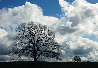 Photograph - Same Tree Many Skies 13 by Robert Woodward