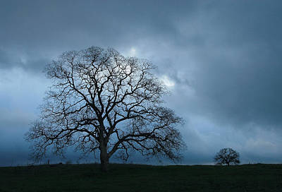 Photograph - Same Tree Many Skies 14 by Robert Woodward