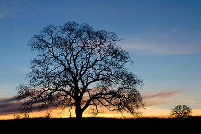 Photograph - Same Tree Many Skies 15 by Robert Woodward
