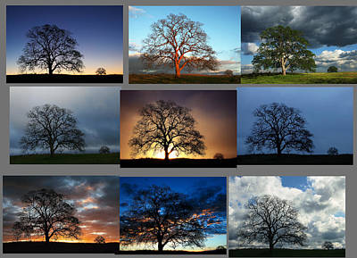Photograph - Same Tree Many Skies Montage by Robert Woodward