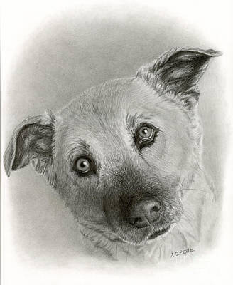Hyper-realism Drawing - German Shepherd Mix- Sami by Sarah Batalka