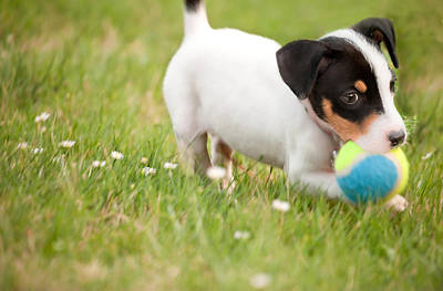 Photograph - Playful Pup by Gregory Ballos