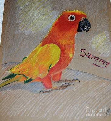 Drawing - Sammy by Brigitte Emme