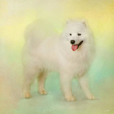 Photograph - Samoyed In Spring by Jai Johnson