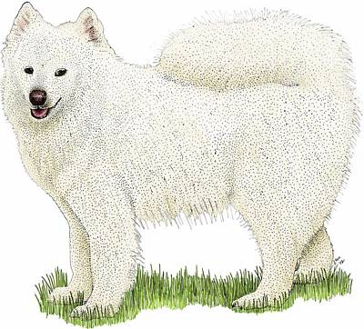 Photograph - Samoyed by Roger Hall