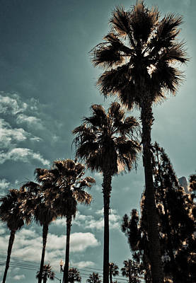Photograph - San Diego Palm Trees by Anthony Doudt