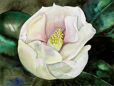 San Diego S Magnolia Art Print