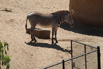 San Diego Zoo - 1212117 Print by DC Photographer