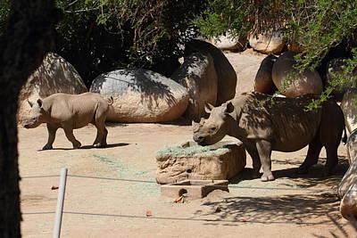 Diego Photograph - San Diego Zoo - 121235 by DC Photographer
